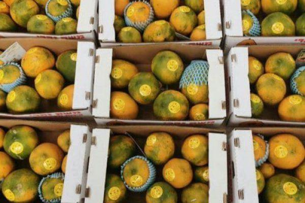 nahari fruit